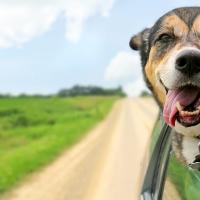 Attenti al cane! Non lo dice un cartello ma l'odontostomatologo animale